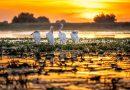 Delta del Danubio: lugares vírgenes, petrificados en una tierra salvaje inquietante
